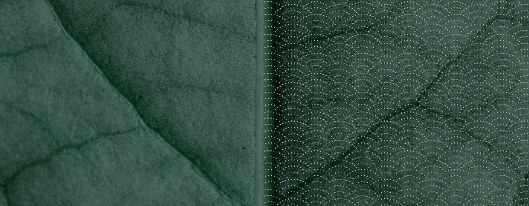 closeup image of green leaf with pattern overlay