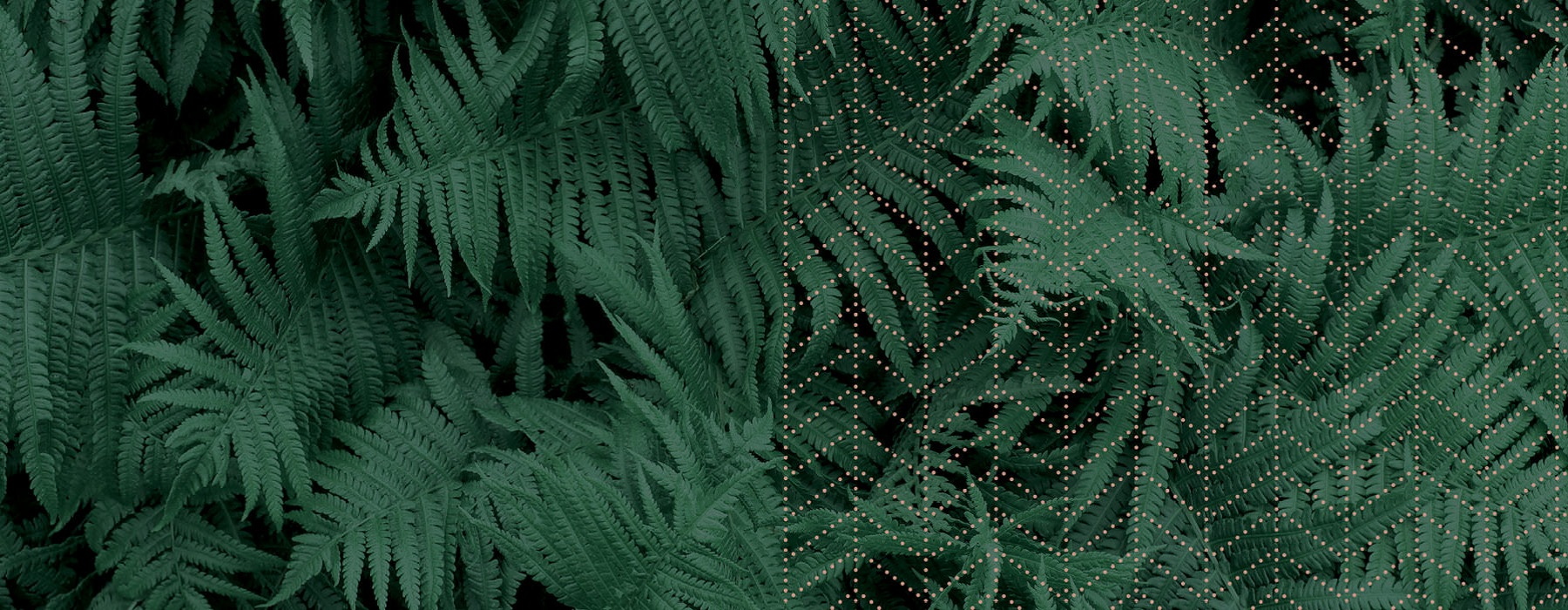 close up of ferns with pattern overlay